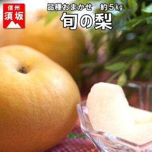 【ふるさと納税】【信州須坂の梨】旬の梨 約5kg 【果物・フルーツ】
