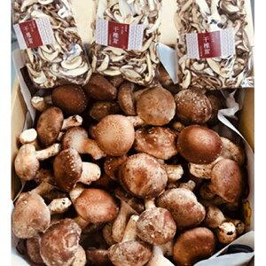 【ふるさと納税】水分たっぷり含んだプリプリ菌床椎茸1kgと干し椎茸 【野菜・きのこ・やさい・茸・キノコ・セット・詰め合わせ】