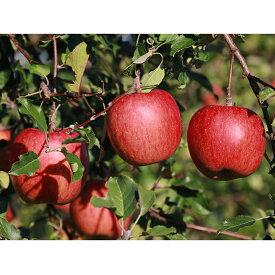 【ふるさと納税】サンふじ 約5kg(訳あり) 【果物類・林檎・りんご・リンゴ】 お届け:2019年11月18日〜12月5日