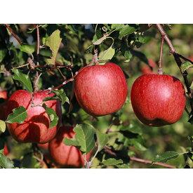 【ふるさと納税】サンふじ 約10kg(訳あり) 【果物類・林檎・りんご・リンゴ】 お届け:2019年11月18日〜12月5日