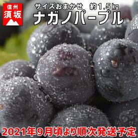 【ふるさと納税】ナガノパープル 約2〜5房 (約1.5kg)《信州グルメ市場》■2021年発送■※9月頃より順次発送予定 果物 ぶどう フルーツ