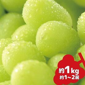 【ふるさと納税】シャインマスカット 約1kg《信州グルメ市場》■2021年発送■※9月中旬頃より順次発送予定 果物 フルーツ ぶどう