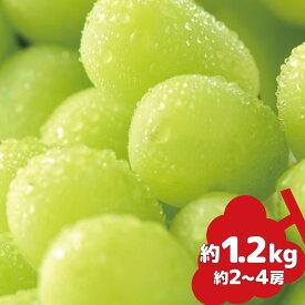 【ふるさと納税】シャインマスカット 約1.2kg《信州グルメ市場》■2021年発送■※9月中旬頃より順次発送予定 果物 フルーツ ぶどう