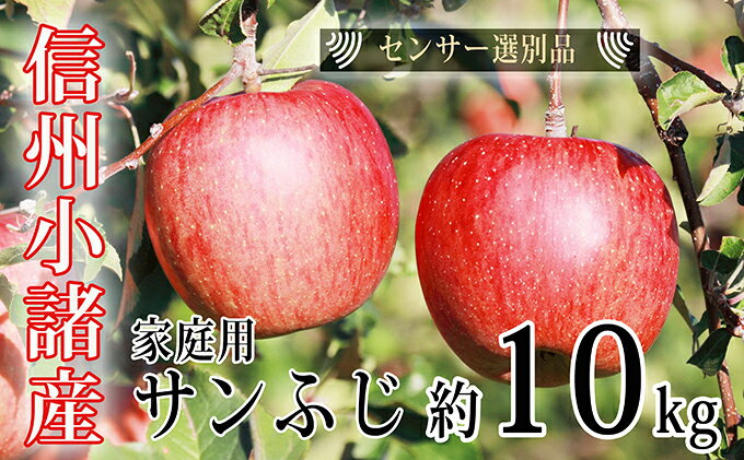 【ふるさと納税】信州小諸産ご家庭用サンふじりんご約10kg 【果物類/林檎・りんご・柑橘類】 お届け:2018年11月中旬〜12月上旬