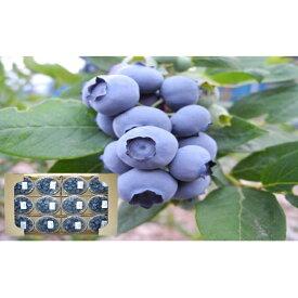 【ふるさと納税】信州小諸産大粒ブルーベリー/約1.2kg 【果物詰合せ・フルーツ】 お届け:2020年7月上旬〜7月下旬