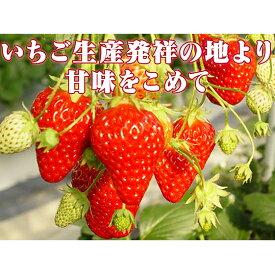 【ふるさと納税】小諸産いちご4パック詰め合わせ 【果物類・いちご・苺・イチゴ】 お届け:2021年1月〜2021年3月中旬