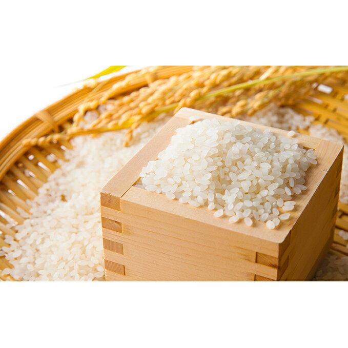 【ふるさと納税】駒ヶ根産コシヒカリ 5kg 【米・精米/コシヒカリ】