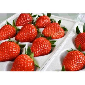 【ふるさと納税】南信州産「いちご」 (300g×8パック) 【たかずやファーム】 【果物類・いちご・苺・イチゴ】 お届け:2020年1月5日〜2月15日