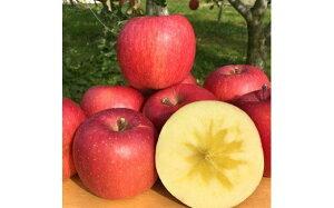 【ふるさと納税】<贈答用>葉とらずりんご「サンふじ」10kg