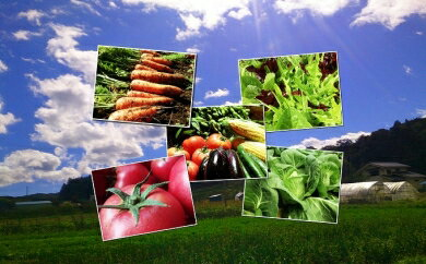 【ふるさと納税】【3ヶ月定期便】くさぶえ農園の季節の野菜セット 【野菜類・セット・詰合せ】
