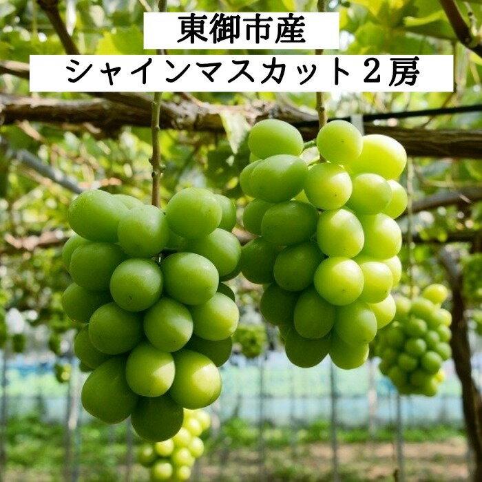 【ふるさと納税】東御市産 シャインマスカット 2房(10月お届け)