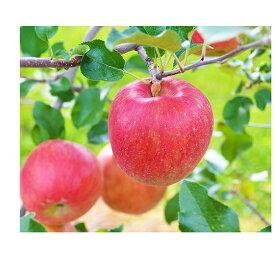 【ふるさと納税】信州の旬のりんごおまかせ約5kgセット 【果物類・林檎・りんご・リンゴ】 お届け:2021年11月中旬〜2022年1月下旬