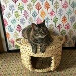 【ふるさと納税】【つぐらクラフト】猫のこしかけ