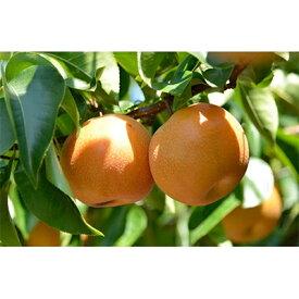 【ふるさと納税】本当に甘い梨です!信州が生んだ甘い「南水」約5キロセット【1041409】
