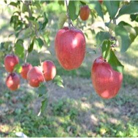 【ふるさと納税】信州のりんご おまかせ 約5キロセット【1041422】