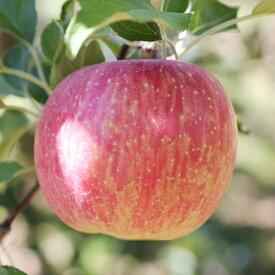 【ふるさと納税】りんごのトップバッターつがる! 長野県産 りんご(つがる) 約5kg 秀品※2021年8月中旬〜9月中旬頃に順次発送予定※着日指定はできません。沖縄・離島への発送不可。