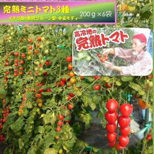 2020年受付開始7月下旬〜発送予定【ふるさと納税】高冷地の完熟ミニトマト(250g×6袋)