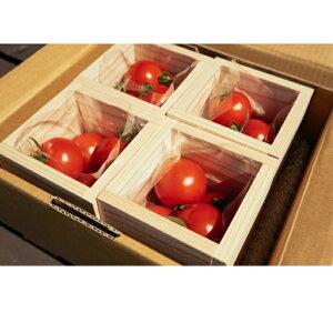 【ふるさと納税】長野県産 フルティカトマト&源流のオシャレ箱セット《スクエアボックス 4個》