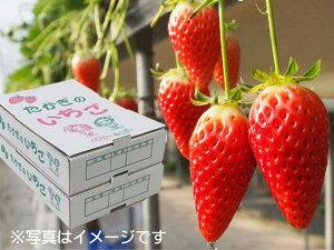 【ふるさと納税】2-A21 喬木産 大粒いちご2箱