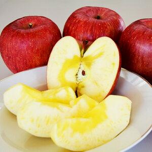 【ふるさと納税】りんご サンふじ[約5kg]※2020年11月下旬〜12月中旬発送※
