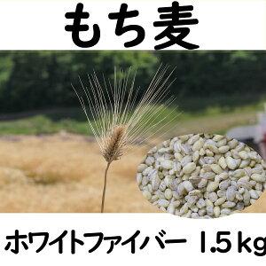 【ふるさと納税】 もち麦 1.5kg 長野県産 ホワイトファイバー 栽培期間中 化学肥料 農薬不使用 おいしく 健康的 キレイの素