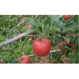 【ふるさと納税】【2020年度産】安曇野のシナノスイート 並品 約10kg 【果物類・林檎・りんご・リンゴ】 お届け:2020年10月上旬〜10月下旬
