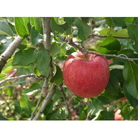 【ふるさと納税】【2020年度産】安曇野のサンふじ 約5kg 【果物類・林檎・りんご・リンゴ】 お届け:2020年12月中旬〜2021年1月下旬
