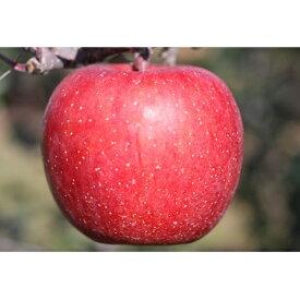 【ふるさと納税】【2021年度産】北條農園の「サンふじ」40個 【果物・フルーツ・果物類・林檎・りんご・リンゴ・サンふじ・約10kg】 お届け:2021年11月下旬〜2022年2月中旬