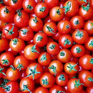 【ふるさと納税】A007-03 ふぞろいミニトマト