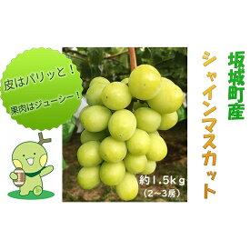 【ふるさと納税】柳澤果樹園シャインマスカット約1.5kg(2房〜3房) 【果物類・ぶどう・マスカット・フルーツ・葡萄】 お届け:2021年8月下旬〜2021年10月中旬