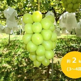 【ふるさと納税】たきざわ果樹園のシャインマスカット約2kg(3〜4房) 【果物類・ぶどう・マスカット・フルーツ】 お届け:2020年9月中旬〜10月初旬