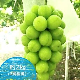 【ふるさと納税】【11・12月発送】K&Y農園 長野県坂城町産 冷蔵シャインマスカット約2kg(3房程度) 【果物類・ぶどう・マスカット・フルーツ・葡萄】 お届け:2021年11月下旬〜12月下旬