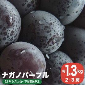 【ふるさと納税】 ナガノパープル(約1.4kg)