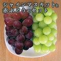 【ふるさと納税】島田果樹園シャインマスカットと赤ぶどうのセット