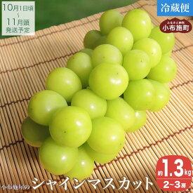 【ふるさと納税】シャインマスカット(約1.3kg)