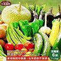 【ふるさと納税】新規就農者応援コースOBUSEMeguru野菜セットシーズンコース