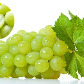 【ふるさと納税】シャインマスカット 5パック 【果物類・ぶどう・マスカット・フルーツ】 お届け:2020年9月中旬〜10月中旬