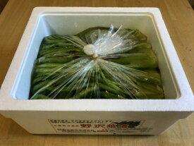 【ふるさと納税】R005-03 岡本商店の野沢菜漬バラ詰め2kg(冷蔵)