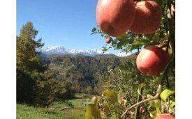 【ふるさと納税】311*信州小川村成就地区限定季節の特選りんご5キロ(早生品種りんご〜サンふじりんご)