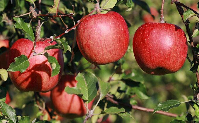 【ふるさと納税】【予約販売】長野県飯綱町産 サンふじりんご 完熟蜜入り 特秀 5kg【果物類・フルーツ・リンゴ・林檎】 お届け:2019年11月28日〜