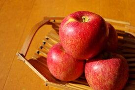 【ふるさと納税】【先行予約】 長野県 信州 飯綱町 の りんご サンふじ ちょっぴり贅沢な 家庭用 訳あり 5kg (サイズおまかせ) 【 リンゴ りんご 林檎 果物 フルーツ 長野 信州 】 お届け:2020年11月中旬〜
