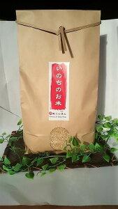 【ふるさと納税】【自然栽培 天真らんまん】いのちのお米 5kg こしひかり(5分づき米)令和元年度産 自然栽培米 無肥料 ・ 無農薬 【米 お米 玄米】