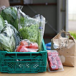 【ふるさと納税】M10S40 美濃加茂産 旬の野菜セット(1回分)