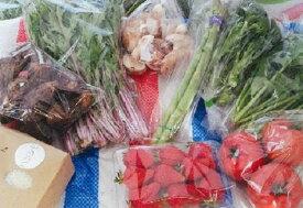 【ふるさと納税】M17S17 みのかも野菜セット(春(3・4・5月)、秋(9・10・11月)2回)
