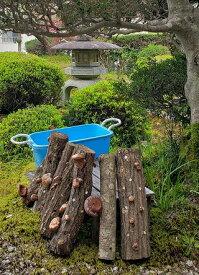 【ふるさと納税】椎茸の原木栽培2夏経過品