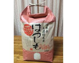 【ふるさと納税】美濃ハツシモ 精米約10kg 美濃桜尾産 お米