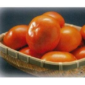 【ふるさと納税】【富有柿の発祥の地 瑞穂市!!】富有柿贈答用12個入り 【果物類/柿】 お届け:2021年11月1日〜25日※出荷時期になりましたら、別途メールにてお届けについてのご案内をさせていただきます。