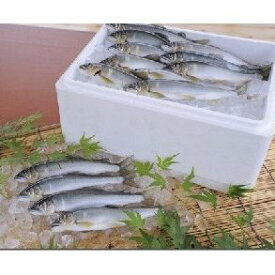 【ふるさと納税】塩焼き用 活〆鮎 1kg 【魚貝類・川魚・アユ】 お届け:2021年6月〜9月