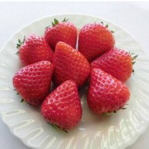 【ふるさと納税】美濃娘2L×4パック 【果物類・いちご・苺・イチゴ】 お届け:2020年1月〜2020年3月 ※出荷時期になりましたら、別途メールにてお届けについてのご案内をさせていただき