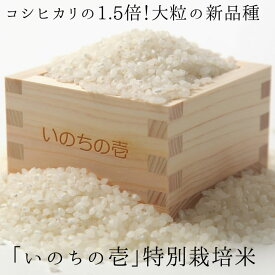 【ふるさと納税】《事前予約制》新米 特別栽培米 10kg×12ヶ月 定期便 『いのちの壱』[M0004]